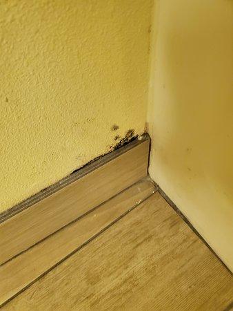 بست ويسترن تاربورو هوتل: Mold in second room bath.