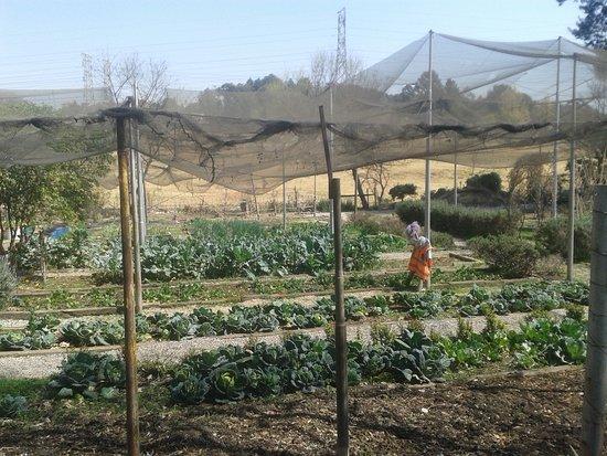 овощной огород