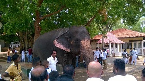 Tangalla, Srí Lanka: Temple .... Tour..... in Kataragama....