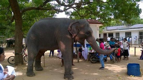 Tangalla, Srí Lanka: Temple .... Tour....