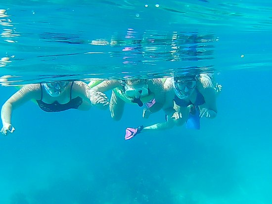 Edelweiss Keys Snorkeling and Eco Tours: So much to see underwater in the Keys.