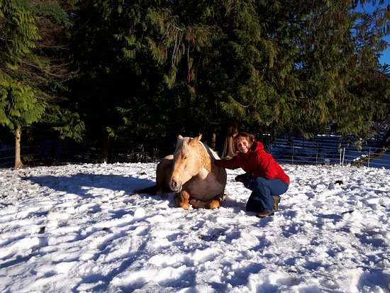 Paradise Acres Ranch: 'Roxy' arrived in the middle of winter... to become part of our family... What a sweet horse!