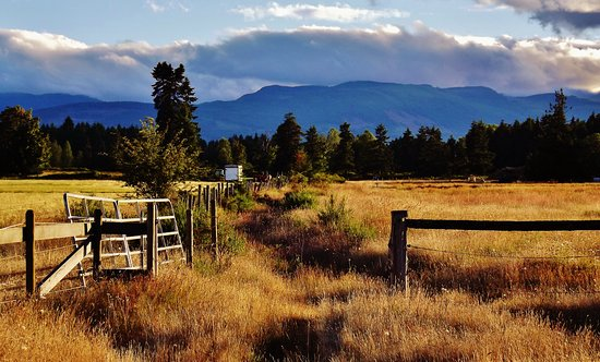 Paradise Acres Ranch: Our view is amazing and ever-changing!