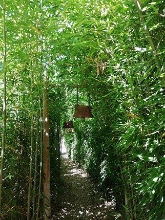 Bambou j adore