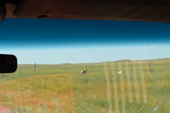 Durham Bison Ranch: The ranch