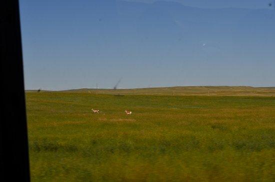 Durham Bison Ranch: The ranch through the window