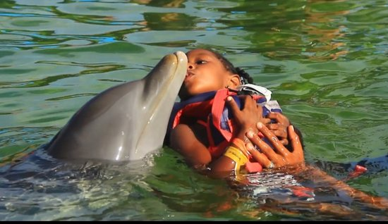 Youngest with dolphin