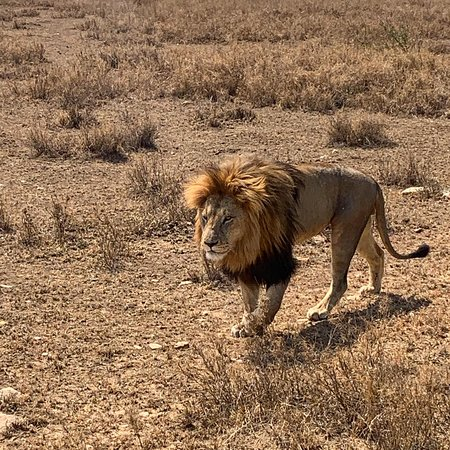 The Lion King nel Serengeti