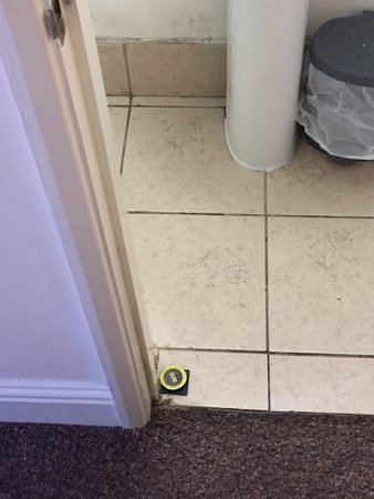 Ant traps in bathroom