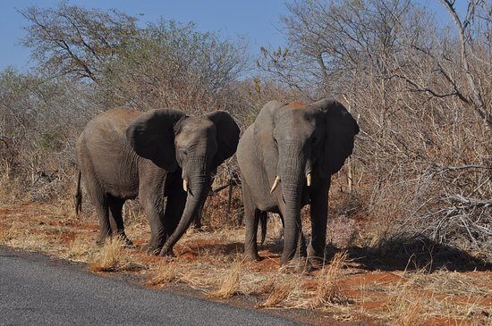 On our way to Vic Falls going through Chobe National Park in Botswana