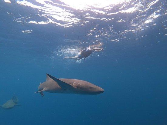 Racing with sharks