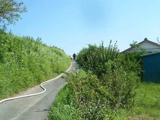 Fukuroi, Japonsko: 袋井の名道の一つ、the lane of masanori-katumi上で袋井消防署の消火訓練が2019年8月25日に実施、ホースが伸びていますね。場所、袋井市諸井原野谷川諸井橋東200mのところの下り坂道路。元はこの道路は非常に狭くひび割れがあったので地元のkatumi kubotaの提案で2017年10班から諸井自治会(久保田進自治会長さん)そして袋井市に修復舗装を要請ところが2017年度12月袋井市の回答でこの件は生活道路事業評価の結果、現時点における事業化は見送りさせていただきました、しかしながら不思議なことにありがたいことに2018年4月5日袋井市建設課がしてくれた道路。しかも2018年度袋井市の最初の工事になった名誉ある道路です。袋井市建設課さん、ありがとうございました。なおついでにこの道路上にある原野谷川諸井橋東の北134号線舗装拡幅2m*70mも実施してくださった。おかげさまで地元の市民が非常に便利になり喜んでいます、奇跡の道路、感動の道路です、なお通行者が激増しています、袋井市建設課さん本当にありがとうございます、袋井市民一同。 袋井市の名道に相応しい道路です。