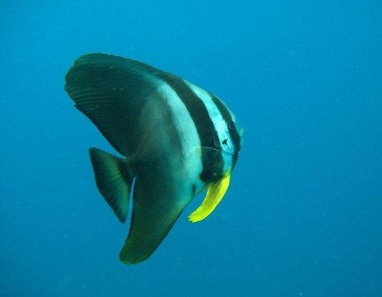 Discover Scuba Diving at Koh Tao or Sail Rock from Koh Samui – slika