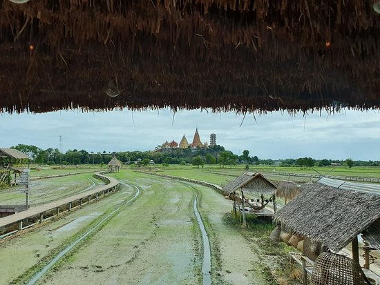MEENA Cafe: view of the cafe rice fields.