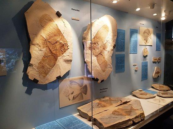 Museo di Bolca