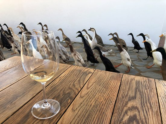 Cape Winelands Guided Private Day Tour from Cape Town: Ducks!