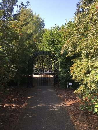 Breezy Knees Gardens: Breezy knees garden