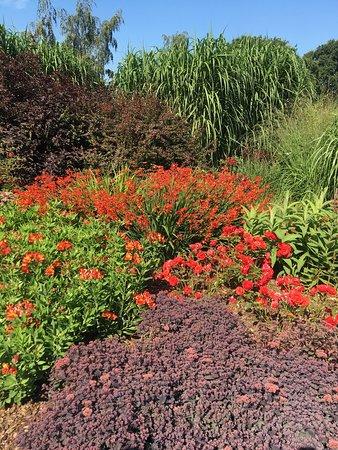 Breezy Knees Gardens: Colour in the September garden