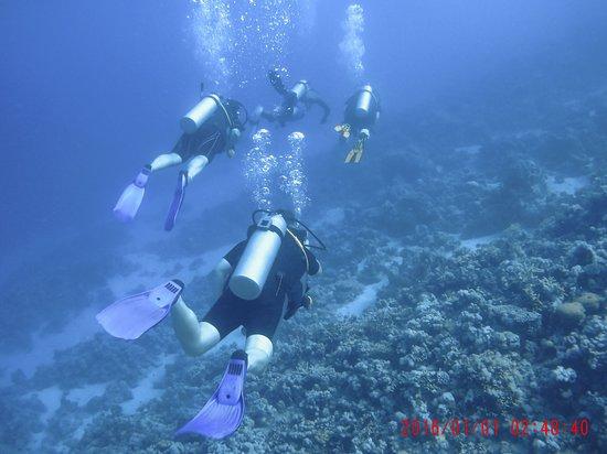 Colona Divers Marsa Alam: Great diving