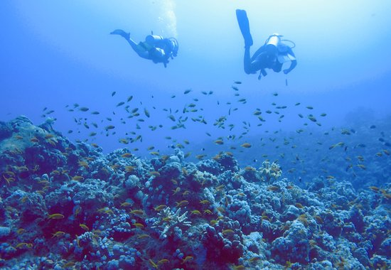 Colona Divers Marsa Alam: Diving the reef