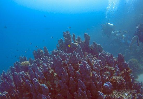 Colona Divers Marsa Alam: Great coral