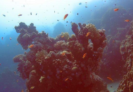 Colona Divers Marsa Alam: Coral spike