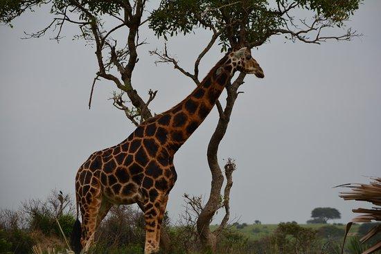 Self Drive in Uganda: Spectacular