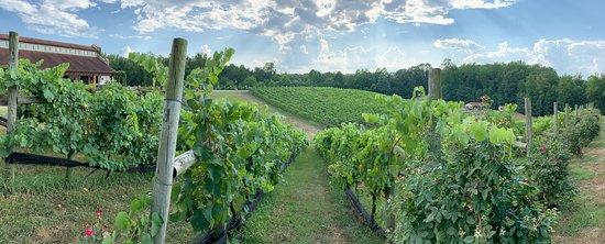 Potomac Point Winery & Vineyard views from humidor hill