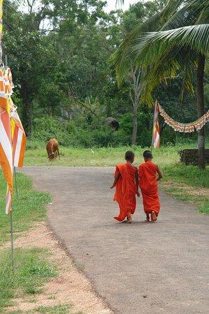 Νταμπούλα, Σρι Λάνκα: Cartoline da Dambulla, Sri Lanka