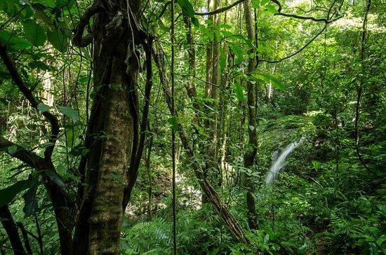 Green (rainy) season waterfall on Sendero Peresoza (Sloth Trail) is likely to be dry from Jan-May.