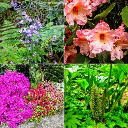 Plas Cadnant Hidden Gardens: Beautiful spring blossoms