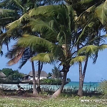 Il The Island di Pongwe