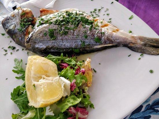 Porta Marina Seafood: Sea Bream - Catch of the Day