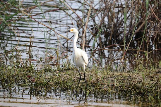 Deerfield Beach Airboat Rides: Egrets in the Everglades