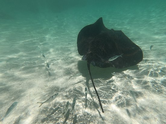 The Verandah Resort & Spa - All Inclusive: Stingray city. Get up and close to the rays.