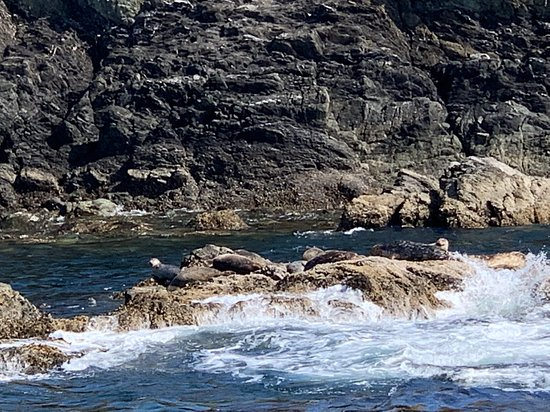 Anacortes Guaranteed Whale Watch Tour – snímka