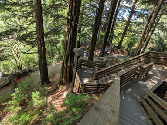 Cape Fox Lodge: Hiking trail from property