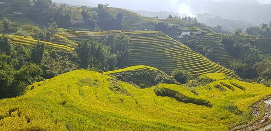 VivuTravel: rice terraces in Sapa