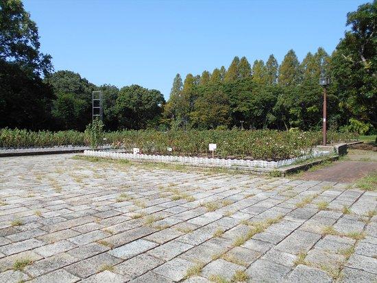 Shonai Green: バラ園