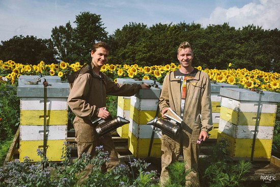 Beekeepers in the sunflowers