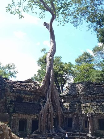 Sunrise Small-Group Tour of Angkor Wat from Siem Reap: Ta prom