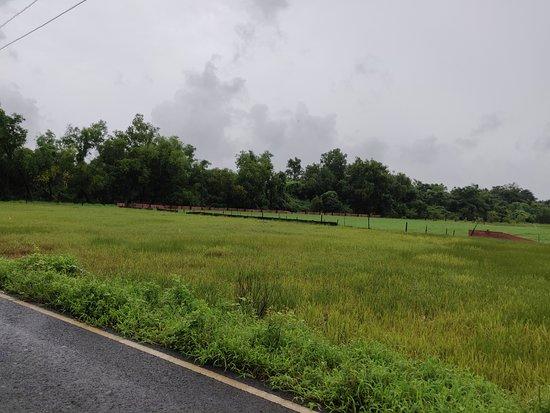 BLive Electric Bike Tours – Escape to Divar Island: Fields on the way