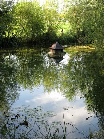 tranquil pond...