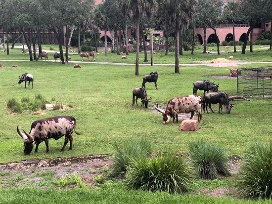 Disney's Animal Kingdom Lodge: Savannah room