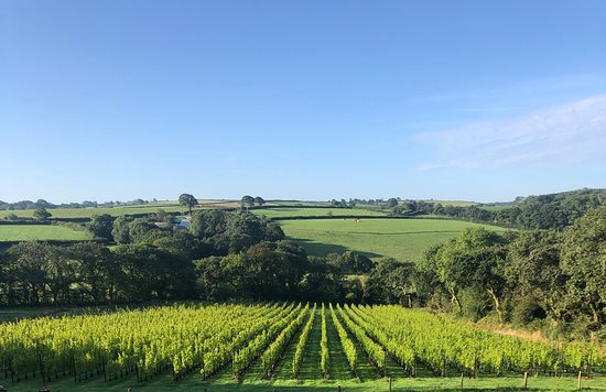 Velfrey Vineyard