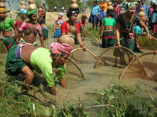 Дальне-Западный регион, Непал: Fishing expedition: Katharia Tharu tribal ladies fishing in Far West Nepal