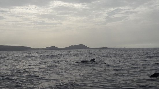 BIOSEAN Whale Watching & Marine Science: BIOSEAN Whale Watching & Marine Science