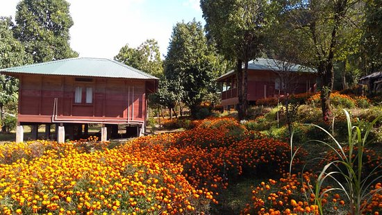 After snowing this winter 2019 - Ảnh của Kalsee Eco lodge, Netherland Camp, Kathmandu - Tripadvisor