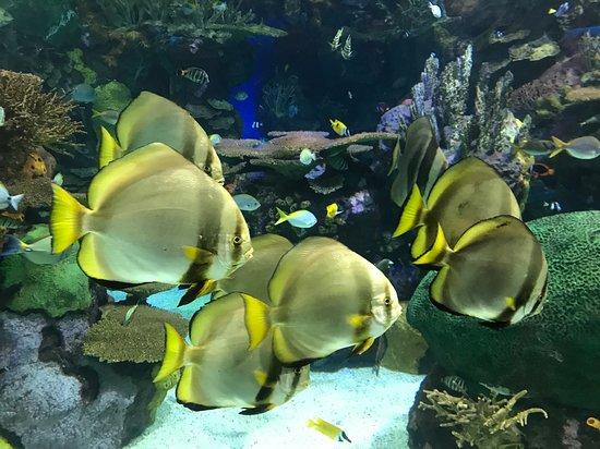 Ripley's Aquarium of Canada: Stunning