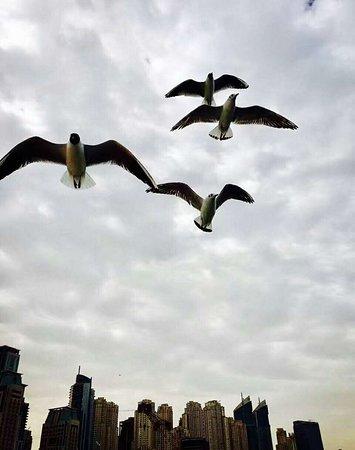 Dubai Luxusyacht Sightseeing: Birds